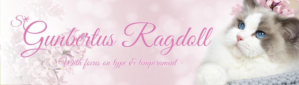 S*Gunbertus Ragdoll